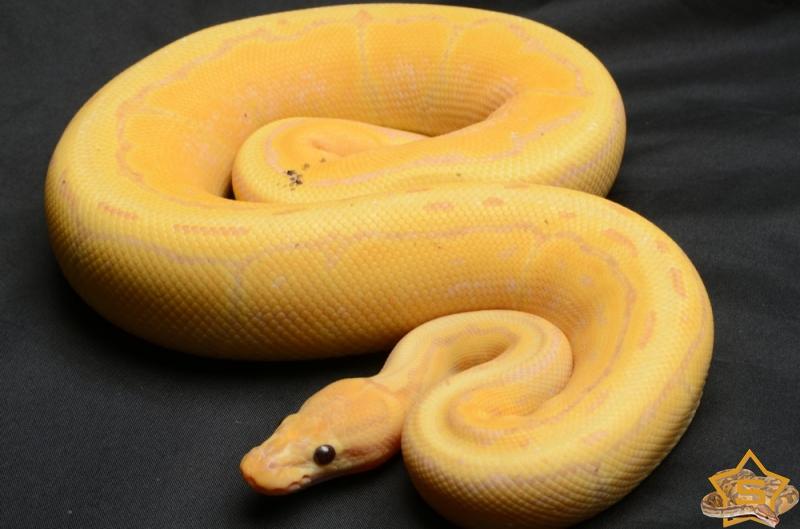 unterschied zwischen python und boa